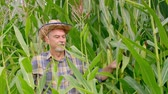 валюта : Farmer walking through the corn field