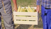 část : Farmers holding a full crate of corn cobs
