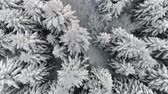 film : Aerial view of winter forest