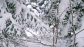 cam : Close up of tress in winter forest