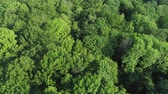 идиллический : Drone view of forest in springtime