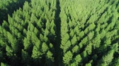 view point : Aerial view of forest in springtime Stock Footage