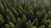 vysoký úhel : Drone view of forest in spring scenery