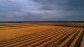 alto : Drone view of wheat field Vídeos