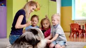 sheepdog : Therapy dog having a meeting in the preschool