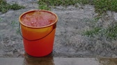 muson : Rain water falling from the roof into the red bucket to save water.
