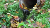 Drain system with water trickling out near autumn forest 4K