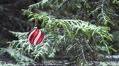 Christmas bauble swinging on snowy fir tree 4K Stockvideo