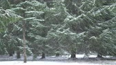 Heavy snow in the forest, snowy weather in the wood 4K Стоковые видеозаписи