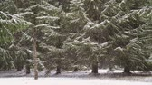 Heavy snow in the forest, slow-motion HD
