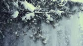 Snow falling down from pine tree, slow motion HD