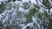 Snow falling down from fir tree, slow motion