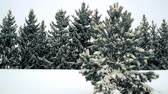Snow falling on pine and fir trees slow motion Стоковые видеозаписи