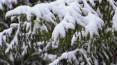 Snow falling on the fir trees, slow motion Стоковые видеозаписи