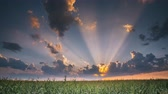 milharal : Summer Sunset Evening Above Countryside Rural Cornfield Landscape. Scenic Dramatic Sky With Rain Clouds On Horizon Above Corn Field Stock Footage