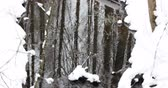 çevre : Stream In Winter Forest. Flow Of Melt Water Among Snow. Approach Of Spring In European Nature Stok Video