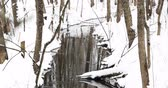 アプローチ : Stream In Winter Forest. Flow Of Melt Water Among Snow. Approach Of Spring In European Nature 動画素材