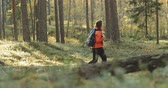 borovice : Belarus. Young Active Caucasian Woman Walking In Autumn Forest. Active Lifestyle In Fall Age Nature. Lady Walking In Wild Forest