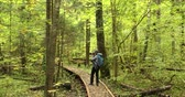 belarus : Belarus. Young Active Caucasian Woman Photographer Taking Photos In Autumn Forest. Active Lifestyle In Berezinsky Biosphere Reserve. People Walking On Forest Wooden Boarding Path Way Pathway Trail Stock Footage