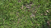 green grass background animation