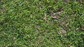 rendetlen : green grass background animation