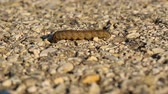 asphalt : Caterpillar crawling on asphalt surface