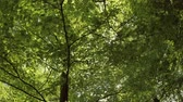 Green leaves and sunlight Stock Footage