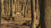 Deer running in the forest