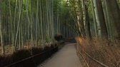 sunlight spot : Kyoto Bamboo Forest