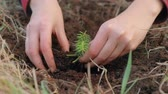 reforestation : Planting a small tree sprout Stock Footage