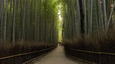 Kyoto Bamboo Forest, zoom in