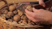 Cracking walnuts for eating
