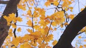 Autumn tree leaves