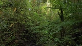 Rainforest, Lush Humid Woods