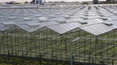 horticultura : Greenhouse agricultural production