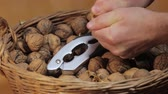 mand : Cracking walnuts for eating