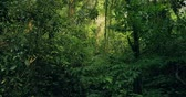 intocada : Rainforest, Lush Humid Woods