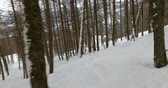 on piste : Skiing in the forest