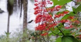 tropical climate : Colibri feeding from flower in a rainforest