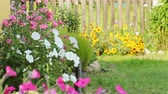 campanário : Beautiful spring background with maroon flowers in the garden. Stock Footage