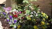 garden flowers : garden with nice small coloured flowers