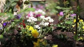 garden flowers : beautiful garden with small flowers Stock Footage