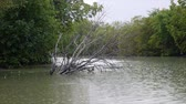 abundante : Falling rain at mangrove forest in Thailand