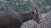 hoof : Grand Canyon wildlife on the Bright Angel trail