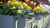 Flowers in baskets on the fence of a cafe. The focus of the camera moves between the vases.