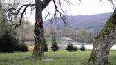 зеленый : Lumberjack with saw and harness climbing a tree.