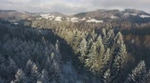 abeto : Aerial view of coniferous forest in winter. Stock Footage