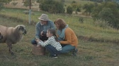 feno : Senior couple with grandaughter feeding a sheep on the farm. Vídeos