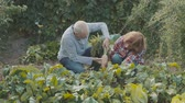 bota : Senior couple gardening in the backyard garden.