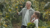 grandchildren : Senior man with grandaughter gardening in the backyard garden